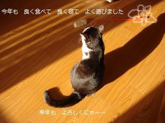 2008きんちゃん秋 042