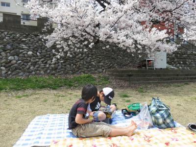 石川県金沢市 犀川 桜 お花見 中村町保育園