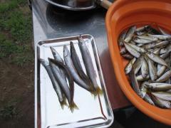 福井 三国 休暇村 キャンプ 釣り