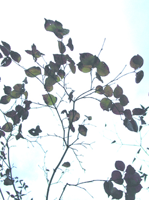2011_10_20_4