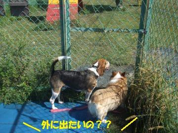 004_convert_20110923230342.jpg