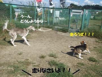 012_convert_20110923225218.jpg