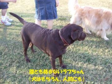 019_convert_20111025233010.jpg