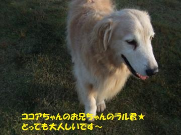023_convert_20111025233934.jpg