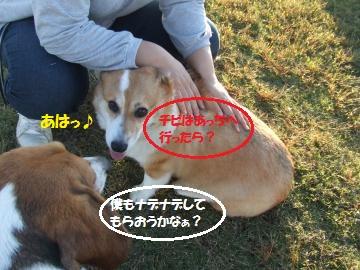 037_convert_20111025233459.jpg