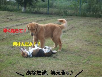 054_convert_20110923230757.jpg