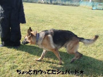 055_convert_20111020231343.jpg