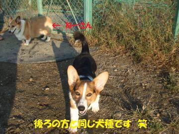 071_convert_20111020231025.jpg