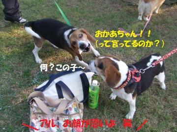 137_convert_20111012225101.jpg