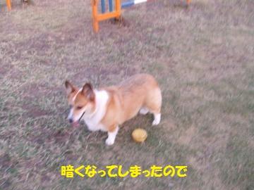 153_convert_20111012230019.jpg