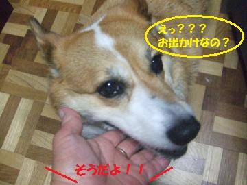 168_convert_20110927222930.jpg