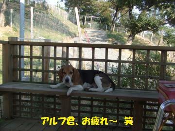 225_convert_20111016204119.jpg