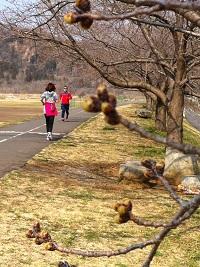 河川敷の桜 1