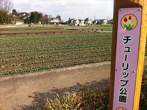 ちゅーりぷ公園