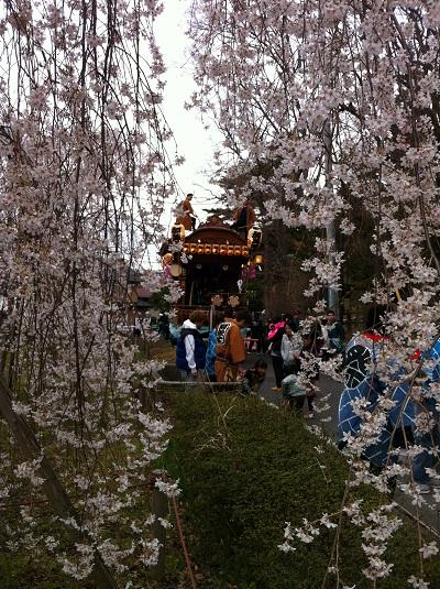 しだれ桜と山車