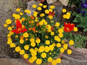 我が家の花 8