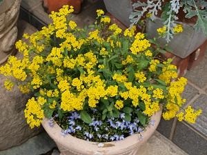 我が家の花 6
