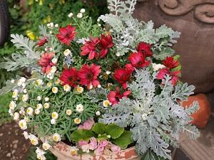 我が家の花 7