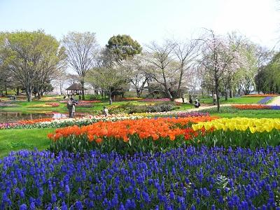 記念公園の花1