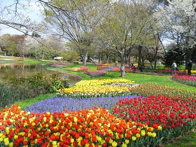 記念公園の花2