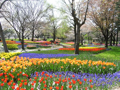 昭和記念の花4