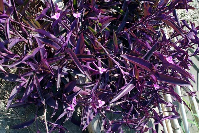 紫御殿(91914 byte)