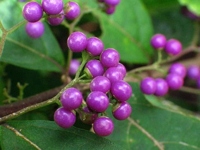 小紫(44106 byte)