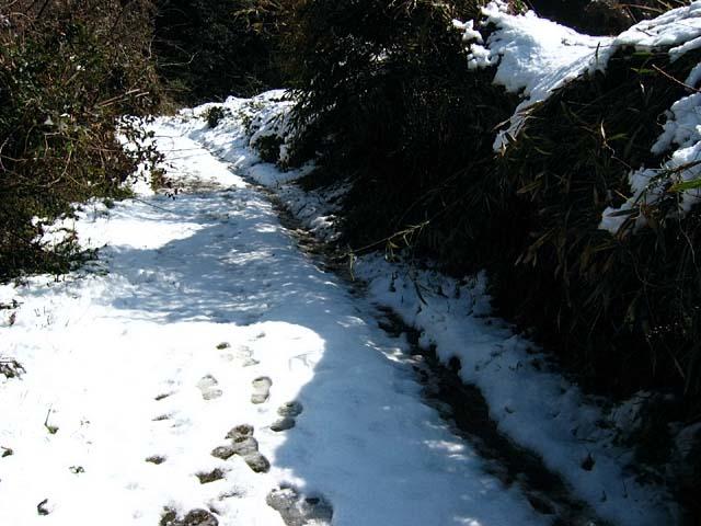 登山道の雪(60666 byte)
