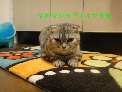 029_convert_20111004215000.jpg