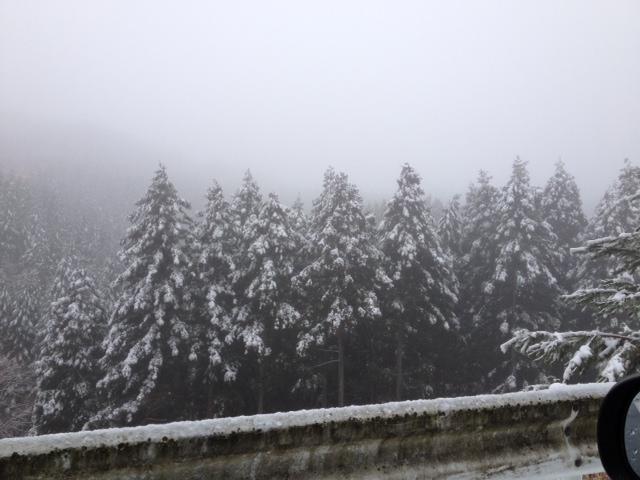 写真 雪道2