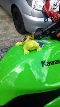 カエル色バイク4