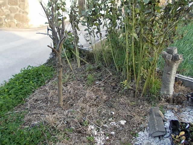 Crotalaria 20130126