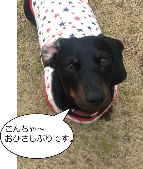 1_20120417233234.jpg