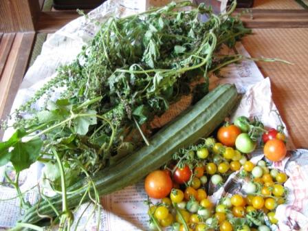 ホーリーバジル他野菜