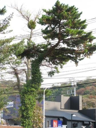 共存の木々