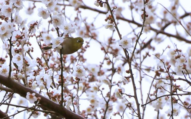 120318umejiro1.jpg