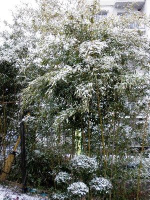 snow1202.jpg