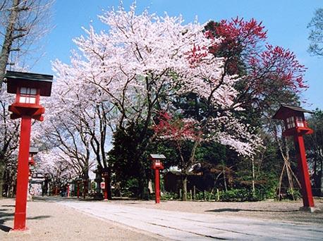 sakura_wasi_1.jpg