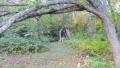 tenjin-01011.jpg