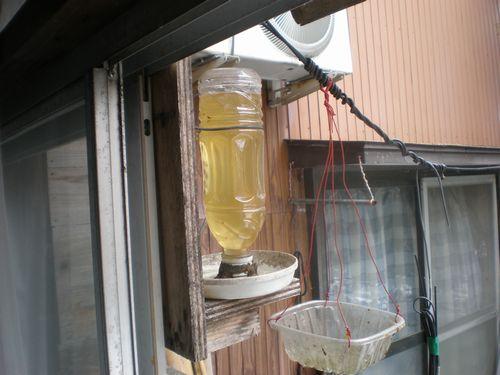 ハチミツ・砂糖シロップ