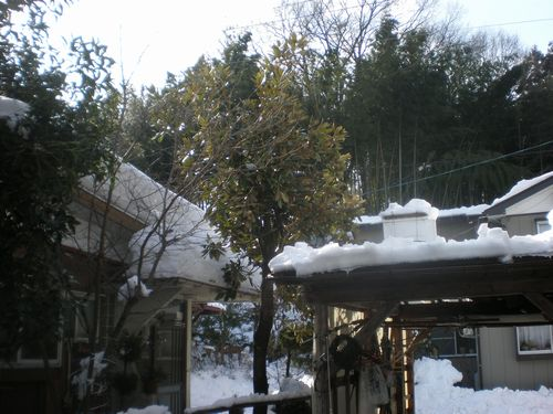 車庫の屋根の巣箱
