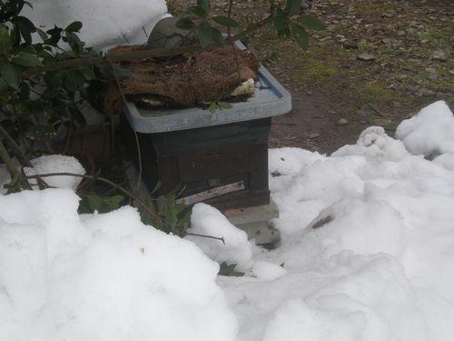 あんなに有った雪の下から巣箱が出てきました