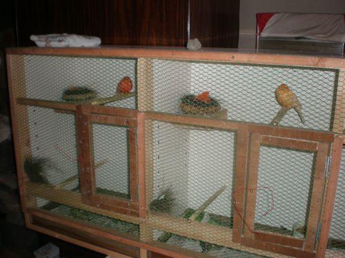 2羽とも卵を産みました