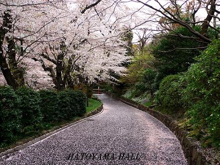 2012411sakura