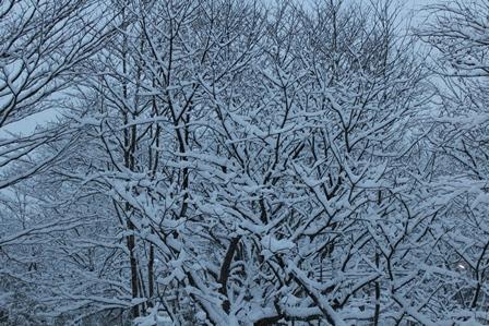 1214雪