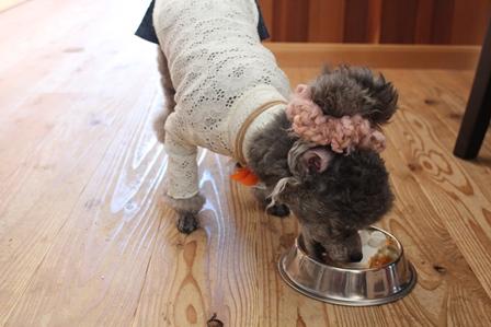 クリスマス会ケーキ犬