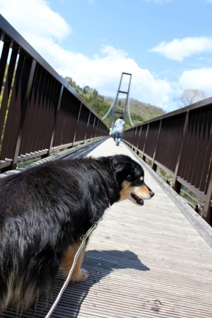 吊り橋渡るのね!
