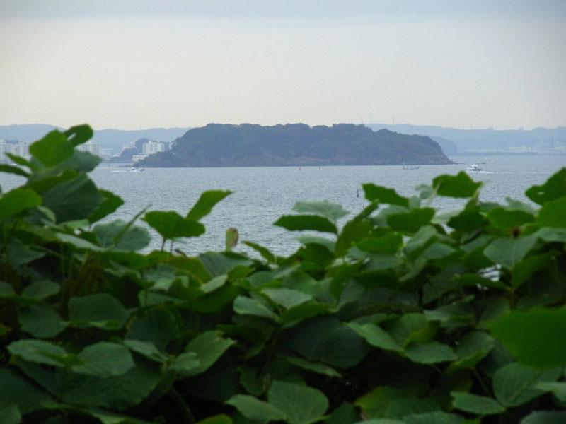 111002藪の向こうの猿島2