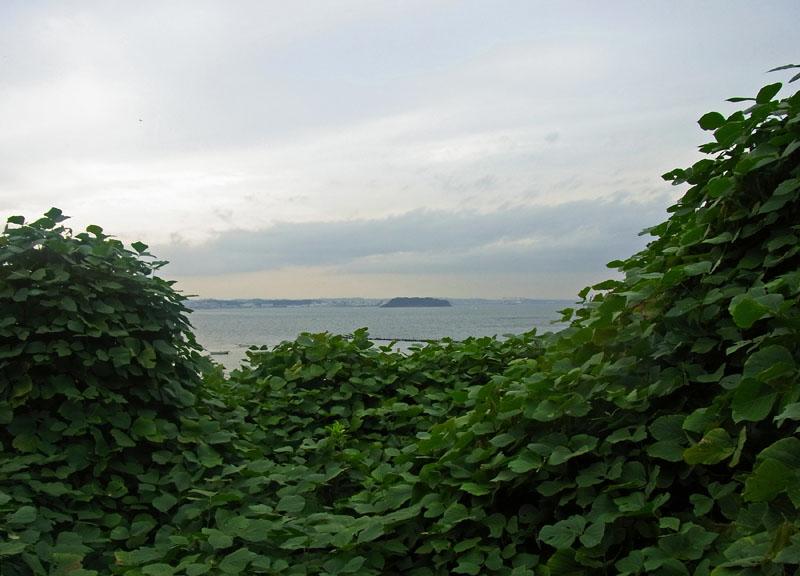 111002藪の向こうの猿島1