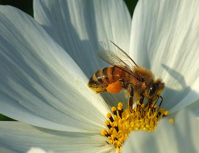 111008花と虫2